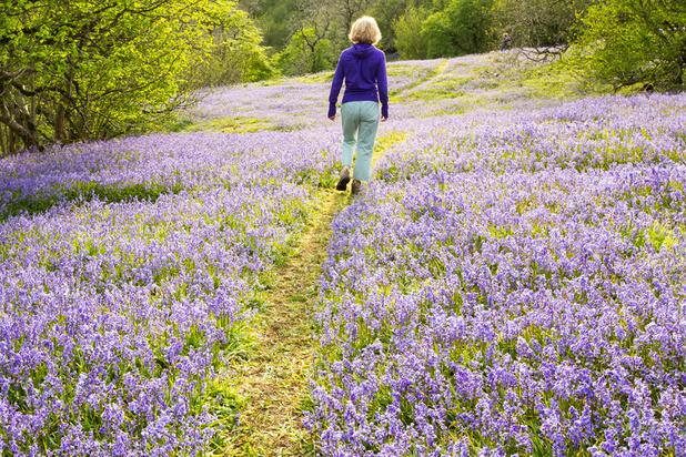 A la recherche des fleurs sauvages: des promenades particulièrement belles au printemps
