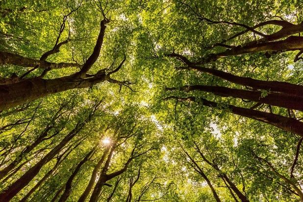 La canopée protège contre les températures extrêmes