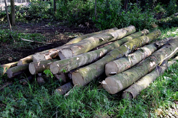 Bomenkap langs Leie in Wevelgem