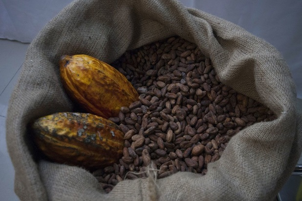 Duurzaamheid in chocoladesector: 'Als we de boeren willen helpen, moet de cacaoprijs naar omhoog'