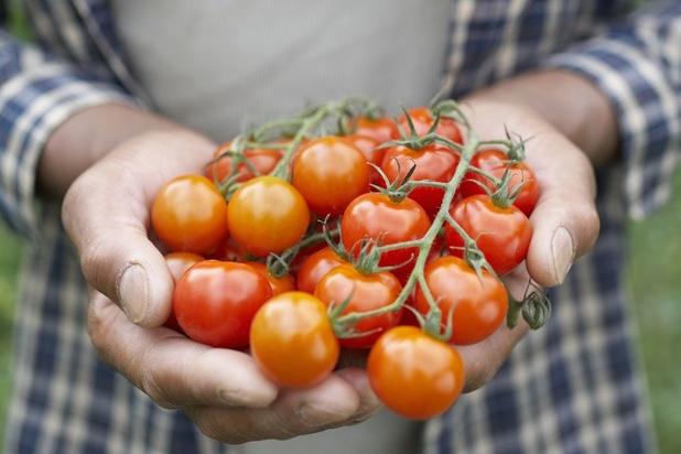 Le succès fulgurant des mini-légumes