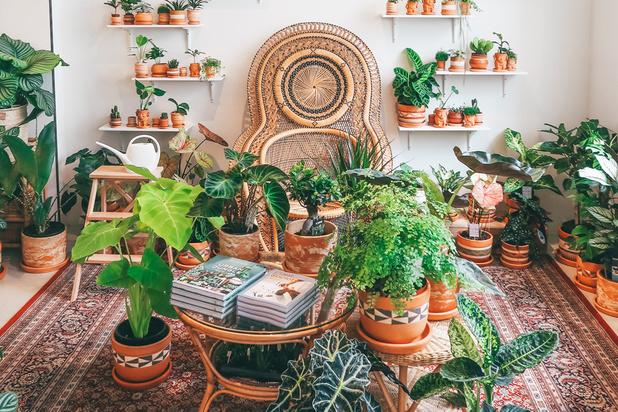 Drie nieuwe plantenwinkels die een tussenstop waard zijn