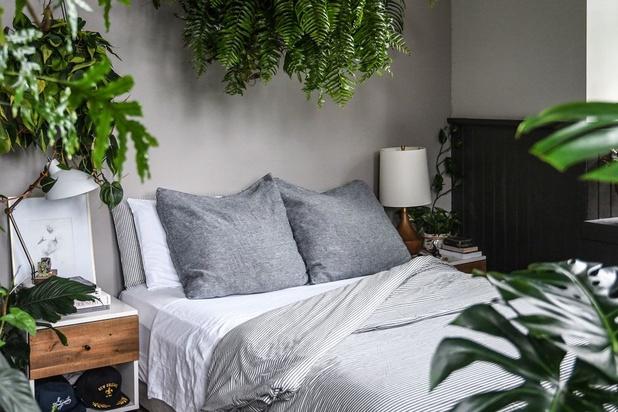 Plant on point: plantfluencer Sofie Vertongen tipt de trendplanten van het moment