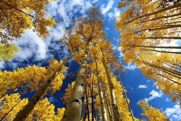 Genetisch gewijzigde bomen zorgen voor duurzame papierproductie