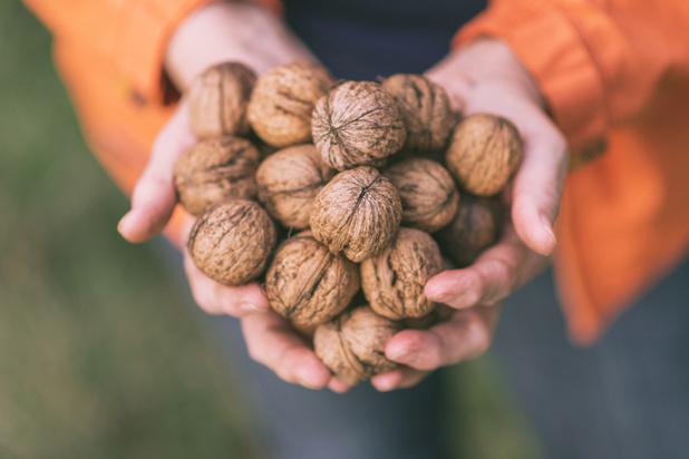 La noix, trésor de l'automne
