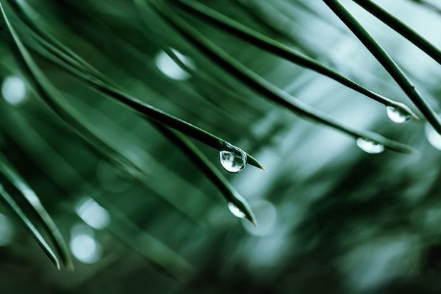 Mysterie van de dag: waarom ruikt regen zo aangenaam?