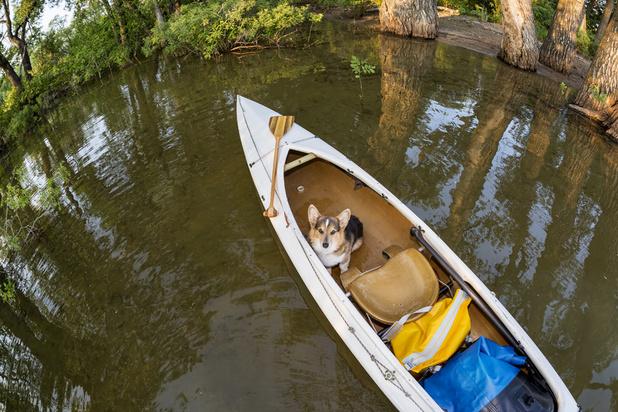 """Le tourisme animalier """"respectueux"""", nouvelle niche d'Airbnb"""