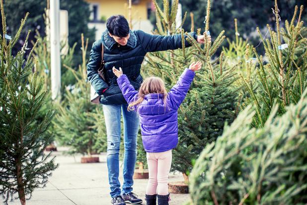 """Sapin de Noël : """"Ikea pollue le marché et tire les prix vers le bas"""""""