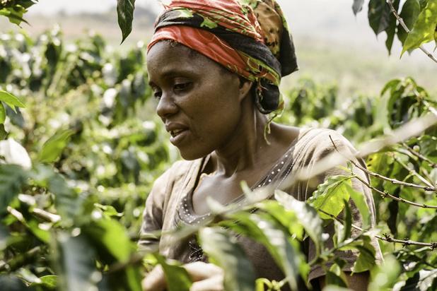 Achter de schermen bij duurzame koffieboeren: 'Het is echt een artisanale bezigheid'