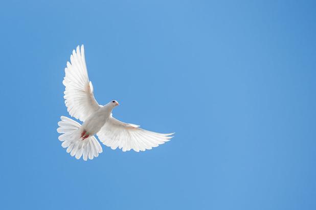 Qui pourrait être contre la paix dans le monde?