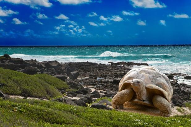 Valies met 185 schildpadden ontdekt op luchthaven Galapagos