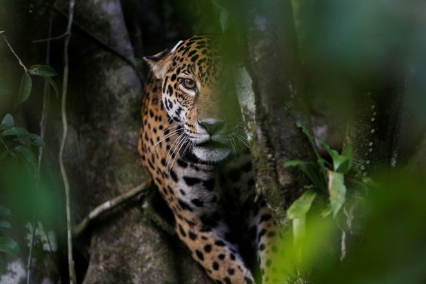 Triste record : au moins 227 défenseurs de la nature assassinés en 2020