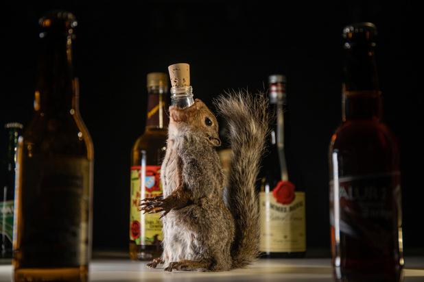 Vin d'excréments ou vodka au scorpion, une exposition suédoise sur les alcools répugnants