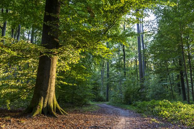 Quel sera l'arbre belge le plus remarquable de l'année 2019?