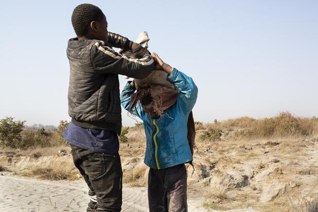 Travail des enfants dans les mines de cobalt: plainte déposée contre des géants de la tech