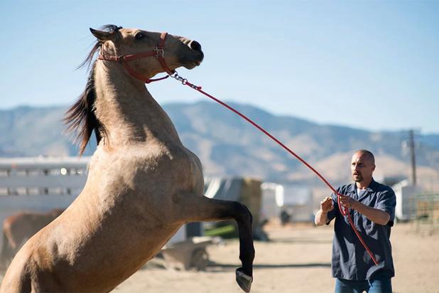 'The Mustang', met Matthias Schoenaerts in de hoofdrol, sluit Film Fest Gent af