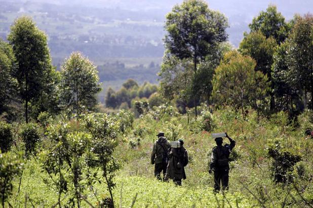 Est de la RDC: augmentation des violences sexuelles