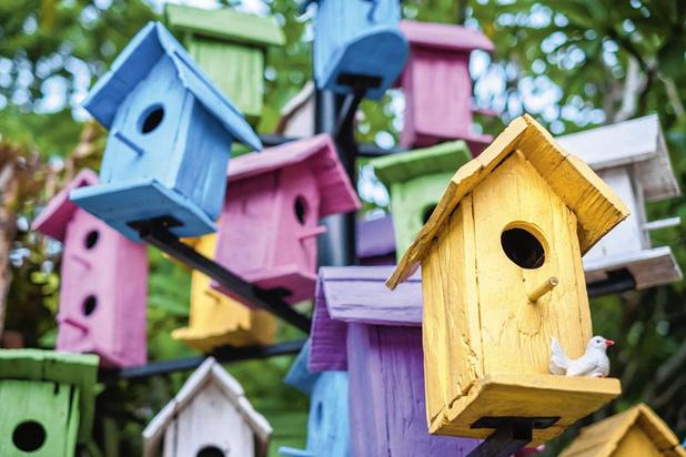 Un toit pour les oiseaux