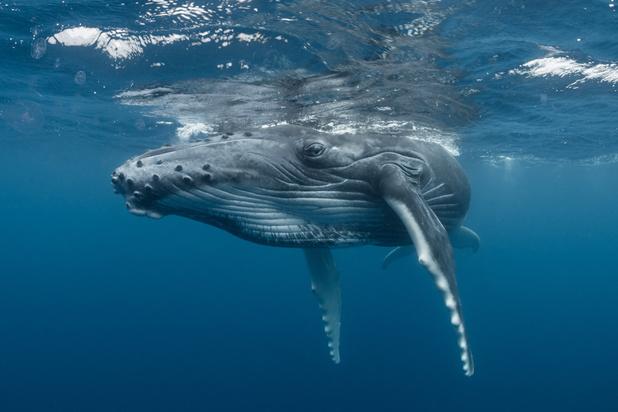 A lui seul, le réchauffement climatique pourrait faire disparaître 17% d'animaux marins