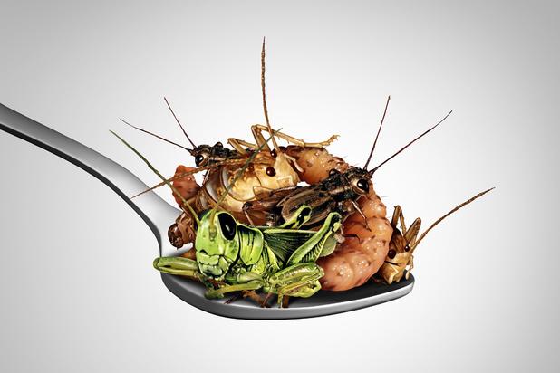 Deux recettes pour manger des insectes