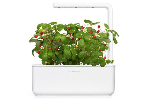 Review: slimme kweekbak voor planten en kruiden