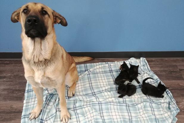 Un chien errant sauve du froid des chatons abandonnés