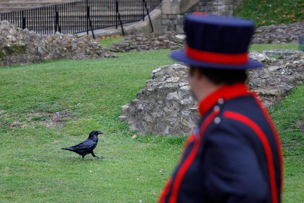 """Le """"maître des corbeaux"""" de la Tour de Londres (en images)"""
