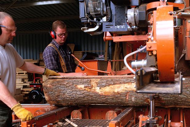 'Prijs hout drastisch gedaald door parasiet'