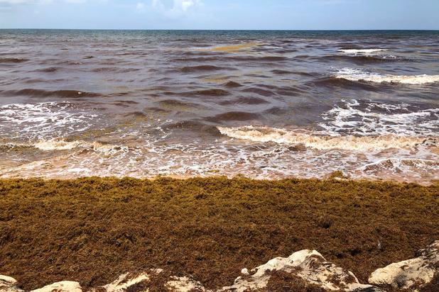 Gigantisch wiertapijt drijft in de Atlantische Oceaan