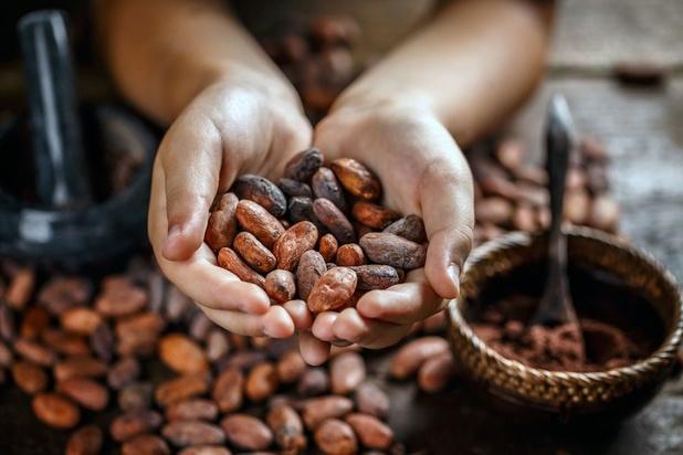 Cacao: Callebaut et Nestlé verseront une prime spéciale aux paysans, positive mais insuffisante
