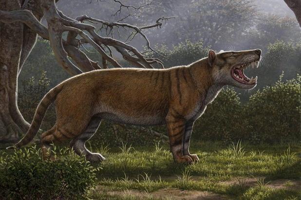 Un lion géant découvert au Kenya