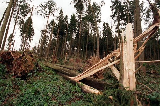 Orkanen bedreigen steeds meer tropische bossen