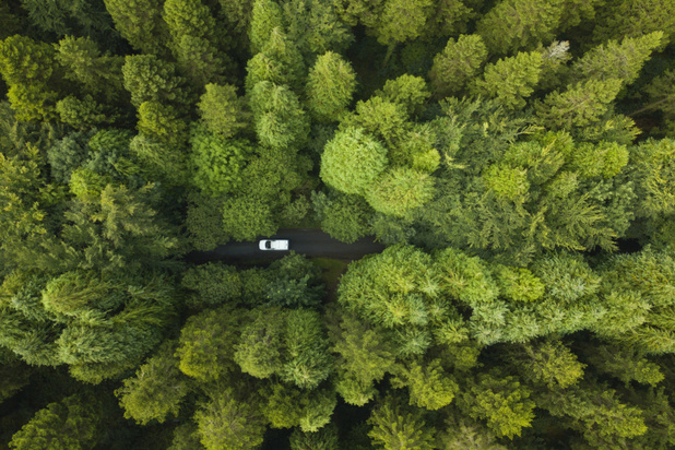 Ierland gaat 440 miljoen bomen planten