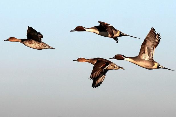 Vogelbescherming: 'Hopelijk kiest Zuhal Demir voor de wetenschap'