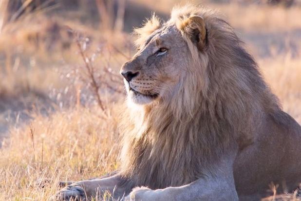 L'Afrique du Sud connaît un essor du safari virtuel depuis le début du confinement