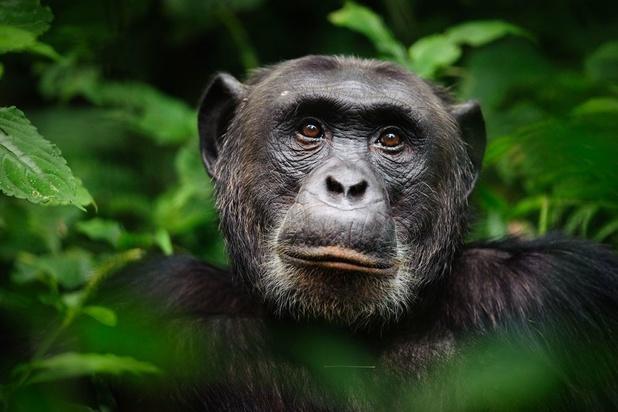 Mensen, ratten en apen: zoek de verschillen