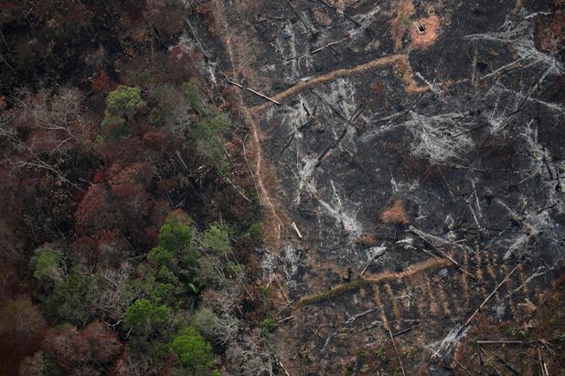 """Amazonie: la déforestation affecte """"toute la biosphère"""""""