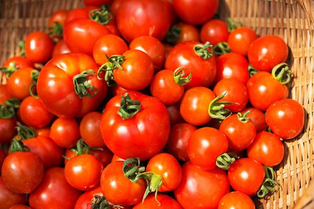 Les tomates cuites stimulent le sperme