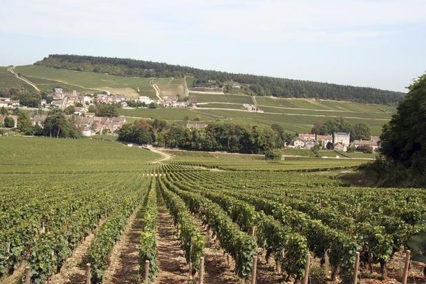 Le vin de Bourgogne perd la moitié des récoltes