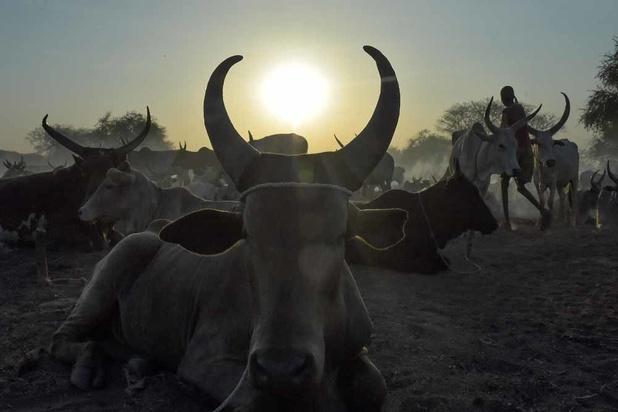 Soudan du Sud: la guerre du bétail (en images)