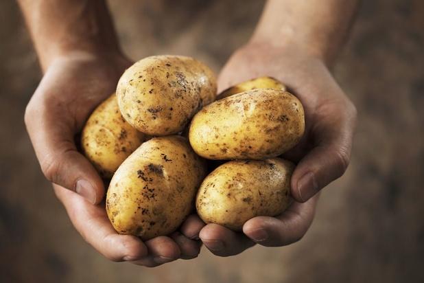 Faire pousser ses propres pommes de terre, c'est facile !
