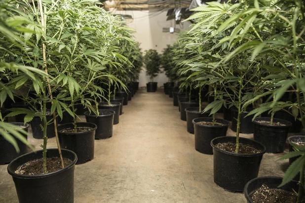 Cannabisplantage in de Veldstraat in Kortrijk breekt Joegoslaven zuur op