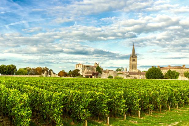 Vin: Comment la canicule contribue à protèger les vignes du Bordelais?
