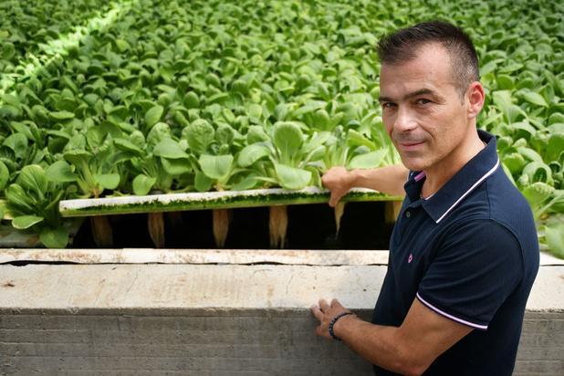 Redorer l'image de la tomate grâce à l'agriculture hors-sol