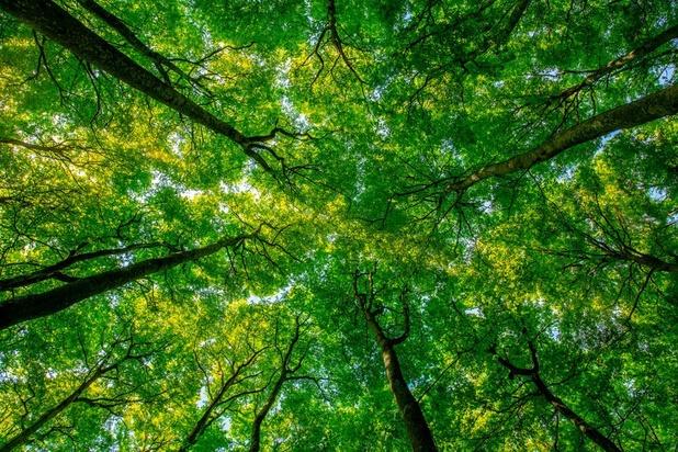 Het bladerdak van bossen isoleert tegen extreme temperaturen