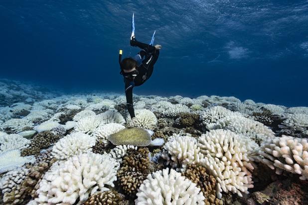 Les océans menacés par l'exploitation minière des grands fonds marins et le rôle ambigu de la Belgique