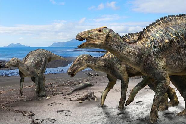 Découverte d'une nouvelle espèce de dinosaure