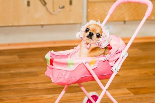 Les animaux domestiques sont-ils trop traités comme des êtres humains ?