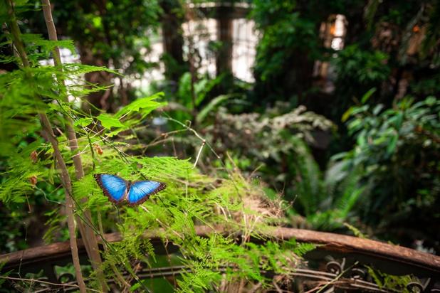 Vlindertuin ZOO Antwerpen opent weer de deuren