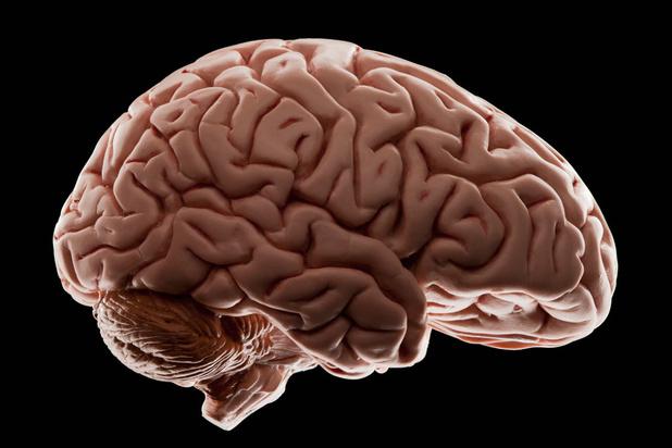 Onze hersenen hebben vet nodig om goed te functioneren
